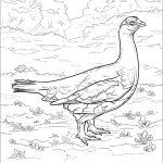 Alaska State Bird Coloring Page | Free Printable Coloring Pages   Free Printable Pictures Of Alaska
