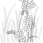 Alaska State Flower Coloring Page | Free Printable Coloring Pages   Free Printable Pictures Of Alaska