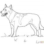 Australian Cattle Dog Coloring Page | Free Printable Coloring Pages   Colouring Pages Dogs Free Printable