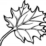 Autumn Borders Colouring Pages | Coloring Pages | Fall Leaves   Free Printable Fall Leaves Coloring Pages