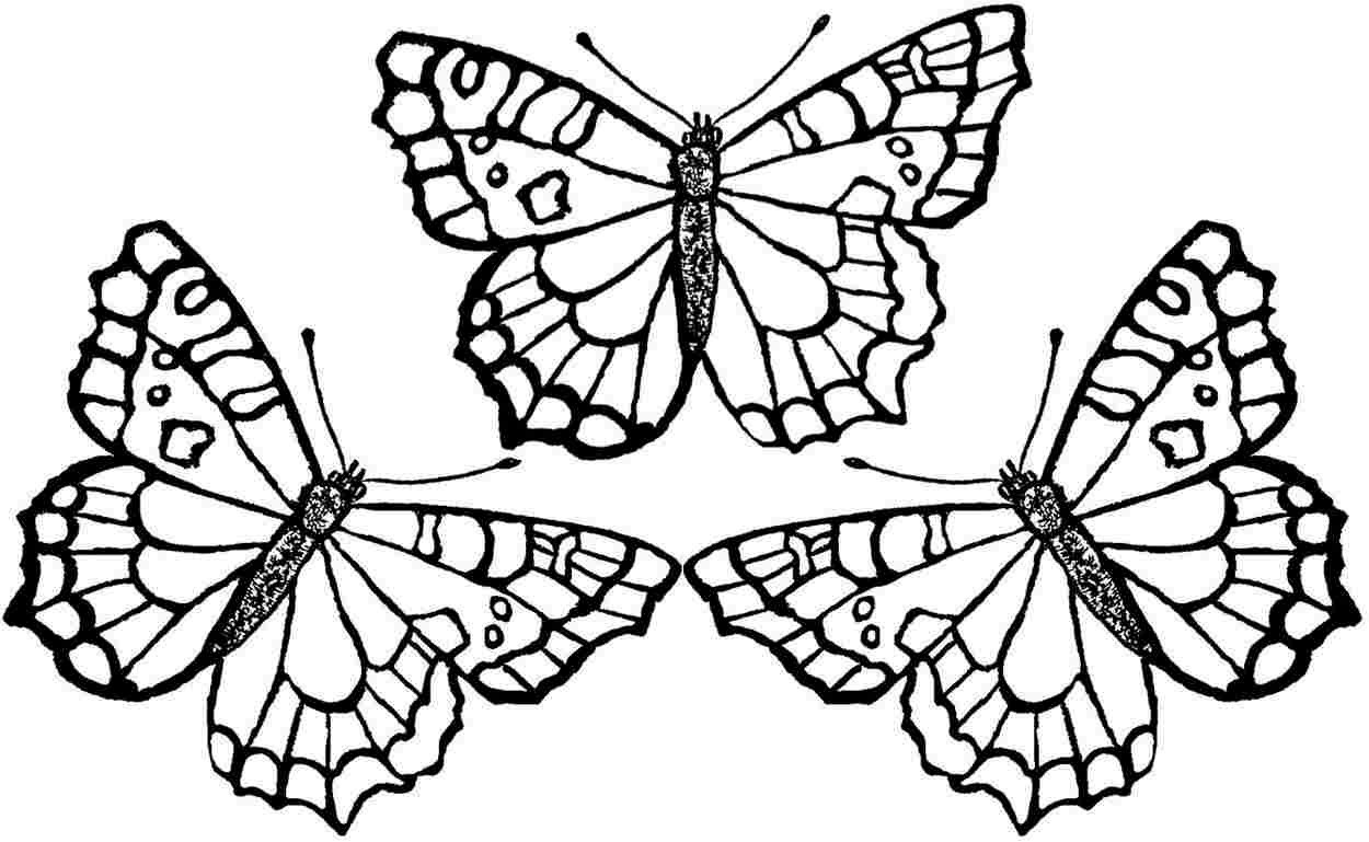 Coloring Book World ~ Monarch Butterfly Coloring Page Freetable - Butterfly Free Printable Coloring Pages