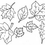 Coloring Ideas : Fall Leaves Coloringagesrintable Ideasage Weird   Free Printable Fall Leaves Coloring Pages