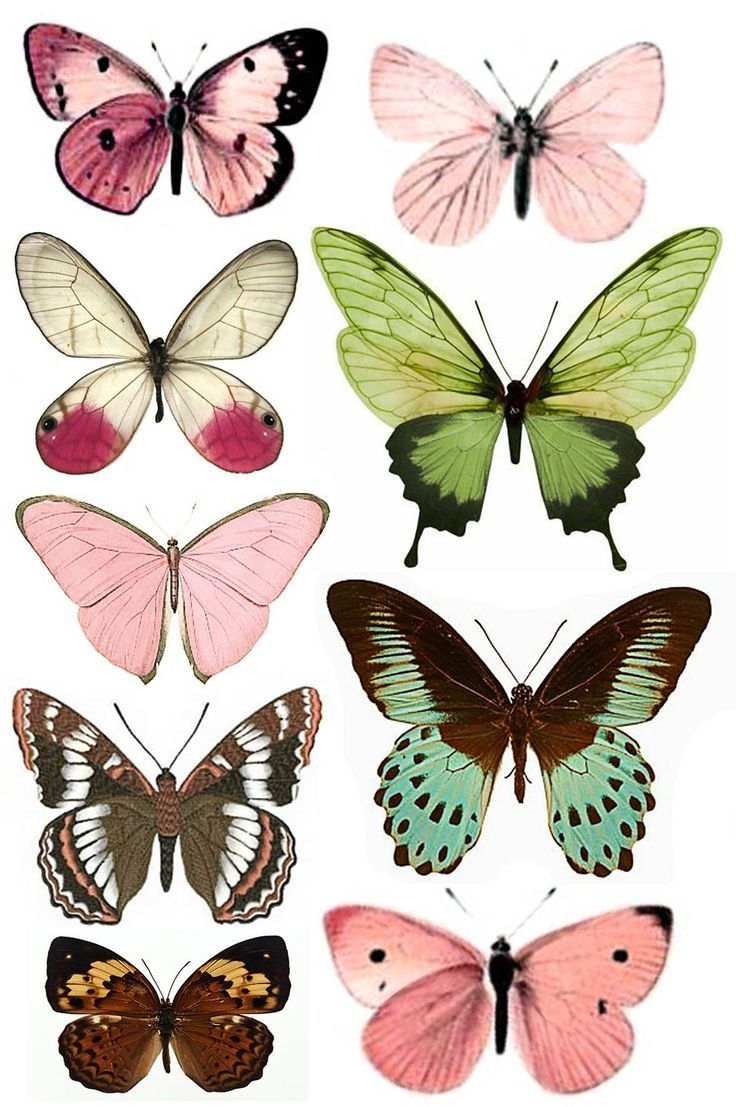 Штампомания: Free Printables. Бабочки. | Free Printables | Butterfly - Free Printable Images Of Butterflies