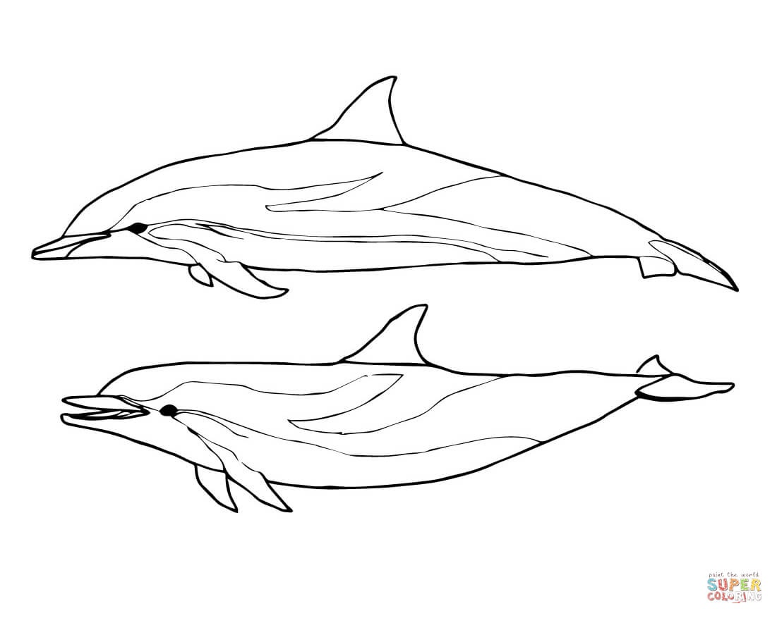 Dolphins Coloring Pages | Free Coloring Pages - Dolphin Coloring Sheets Free Printable