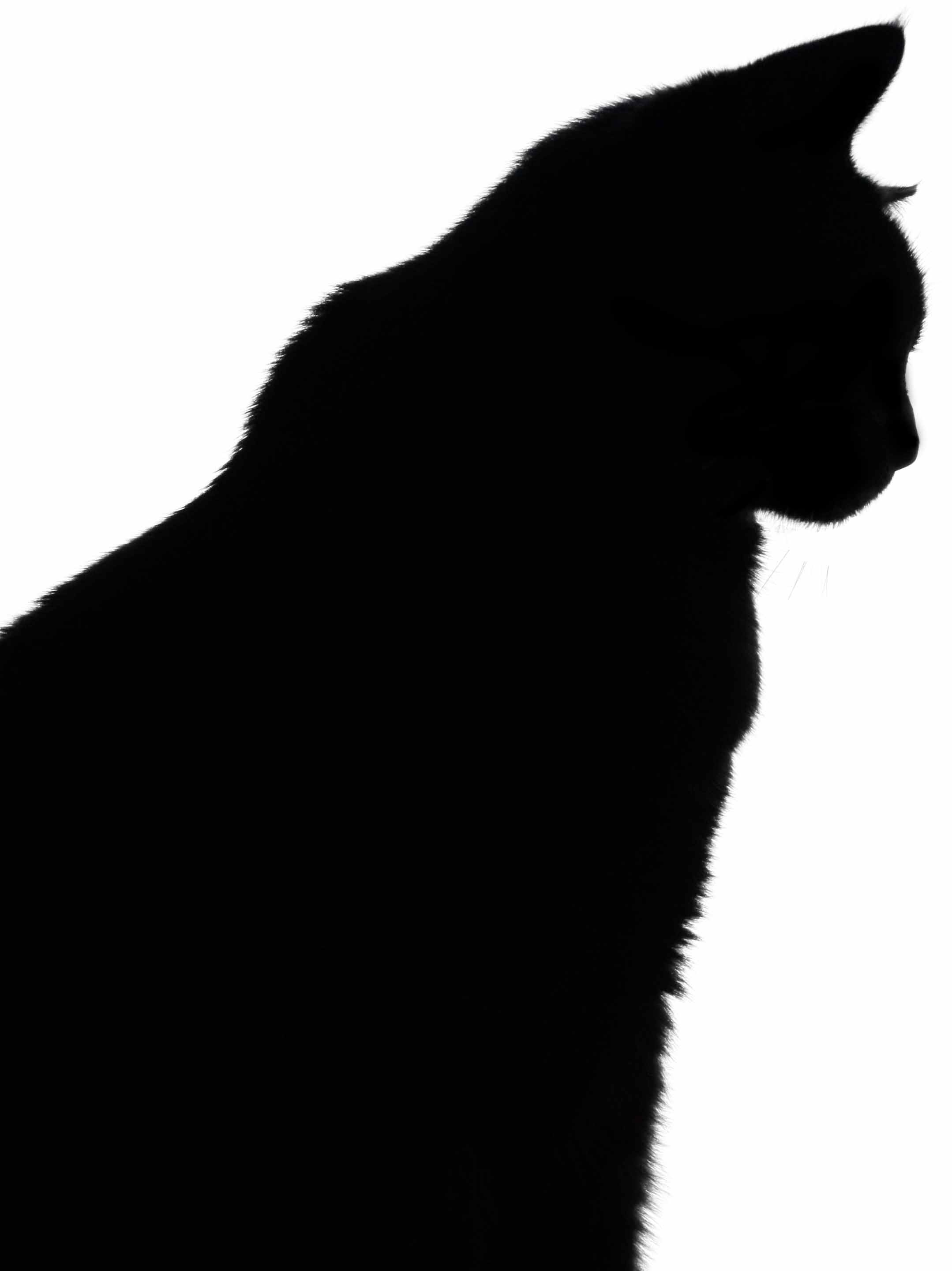 Free Cat Head Silhouette, Download Free Clip Art, Free Clip Art On - Free Printable Cat Silhouette