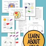 Free Plant And Animal Cell Printables   Free Printable Cell Worksheets
