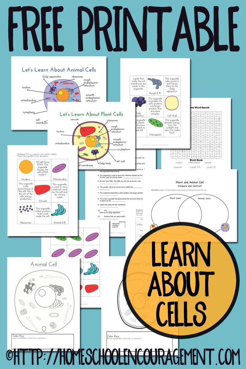 Free Plant And Animal Cell Printables - Free Printable Cell Worksheets