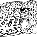 Free Printable Cheetah Coloring Pages For Kids   Coloringbay   Free Printable Cheetah Pictures