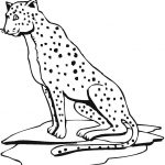 Free Printable Cheetah Coloring Pages For Kids   Free Printable Cheetah Pictures
