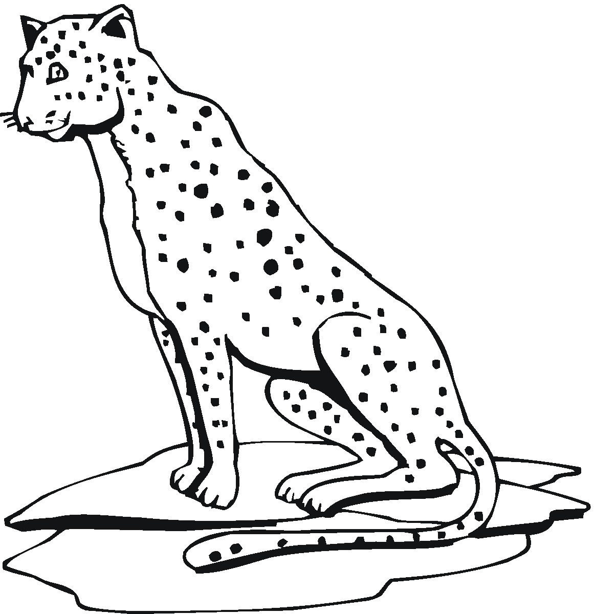 Free Printable Cheetah Coloring Pages For Kids - Free Printable Cheetah Pictures