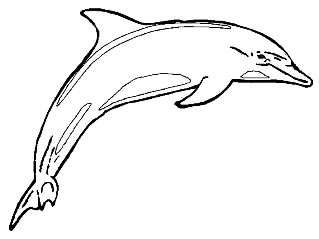 Free Printable Dolphin Pictures, Download Free Clip Art, Free Clip - Dolphin Coloring Sheets Free Printable