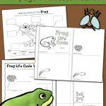 Frog Life Cycle Worksheets   Mamas Learning Corner   Life Cycle Of A Frog Free Printable Book
