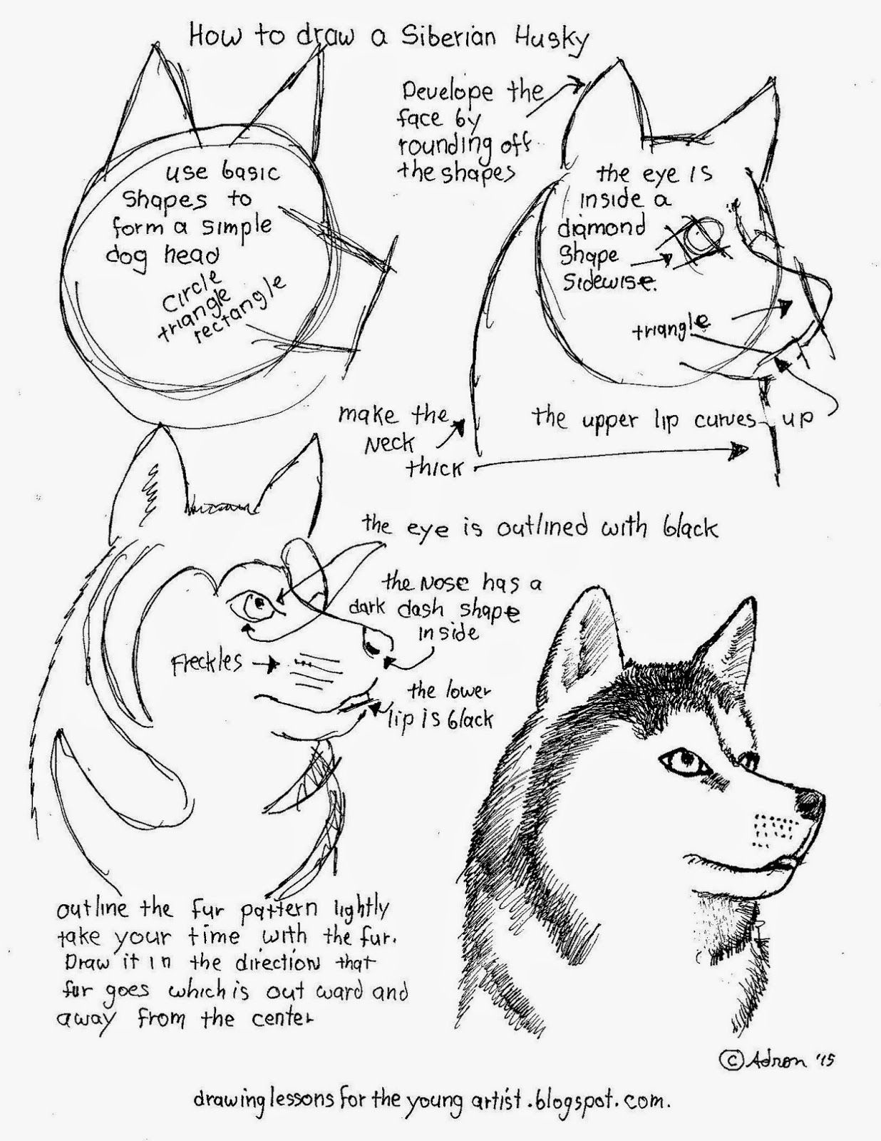 How To Draw Worksheets For The Young Artist: How To Draw A Siberian - Free Printable Drawing Worksheets