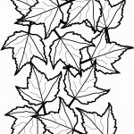 Leaf Coloring Page Cooloring Book Fall Leaves Coloring Sheet Free   Free Printable Fall Leaves Coloring Pages
