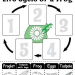 """Life Cycle Of A Frog"""" Free Printable Worksheet 