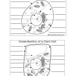 Plant And Animal Cell Worksheet   Siteraven   Free Printable Cell   Free Printable Cell Worksheets