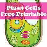 Plant Cells Printable Pack | Science   Cells | Niños Gif, Ciencia   Free Printable Cell Worksheets