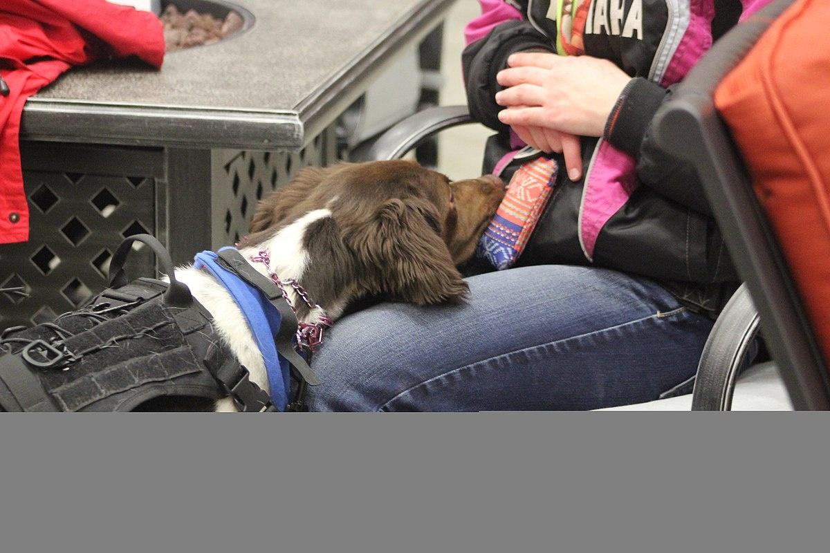 Service Dog - Wikipedia - Free Printable Service Dog