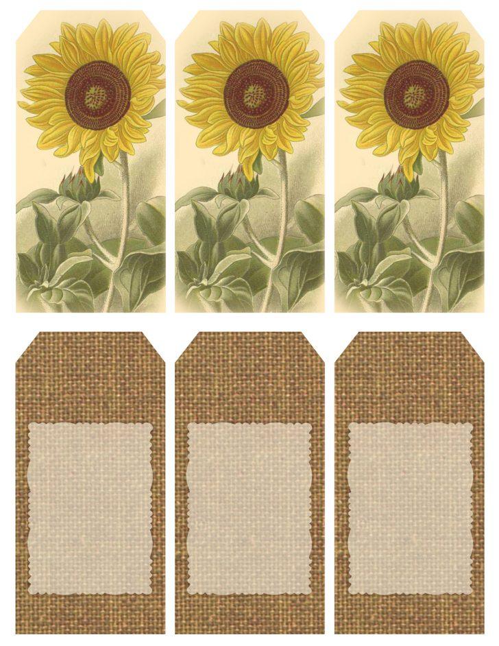 Free Printable Sunflower Template