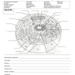 Worksheet : Animal Cell Coloring Worksheet Answers Animal And Plant   Free Printable Cell Worksheets