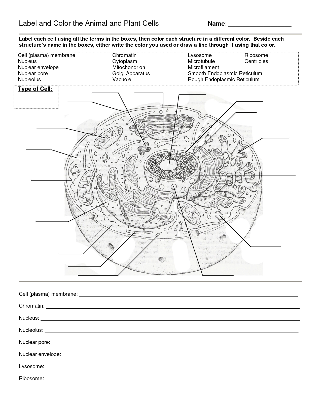 Worksheet : Animal Cell Coloring Worksheet Answers Animal And Plant - Free Printable Cell Worksheets