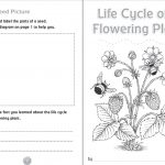 10 Ready To Go Resources For Teaching Life Cycles | Scholastic   Free Plant Life Cycle Worksheet Printables