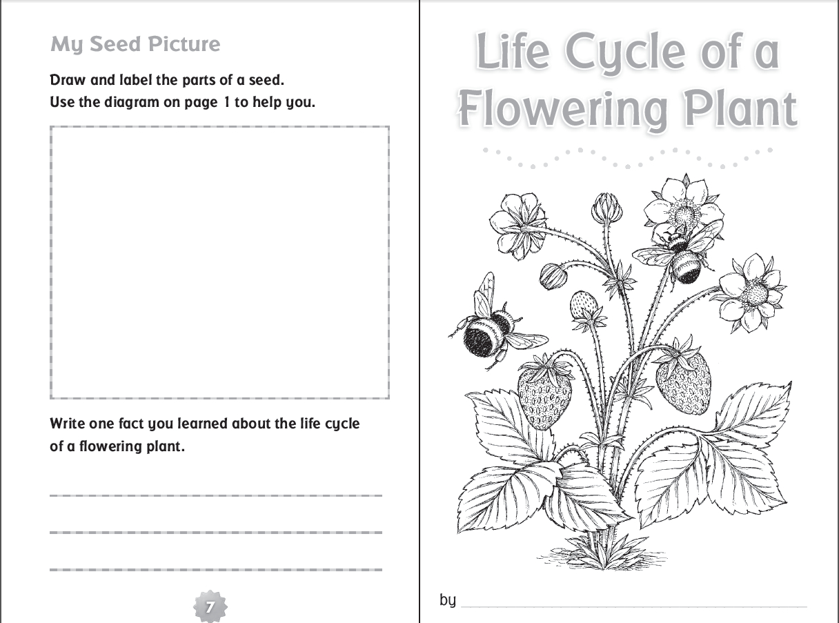 10 Ready-To-Go Resources For Teaching Life Cycles | Scholastic - Free Plant Life Cycle Worksheet Printables