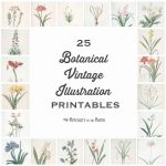 25 Vintage Botanical Illustrations: Free Printable Art   Floral Printables Free