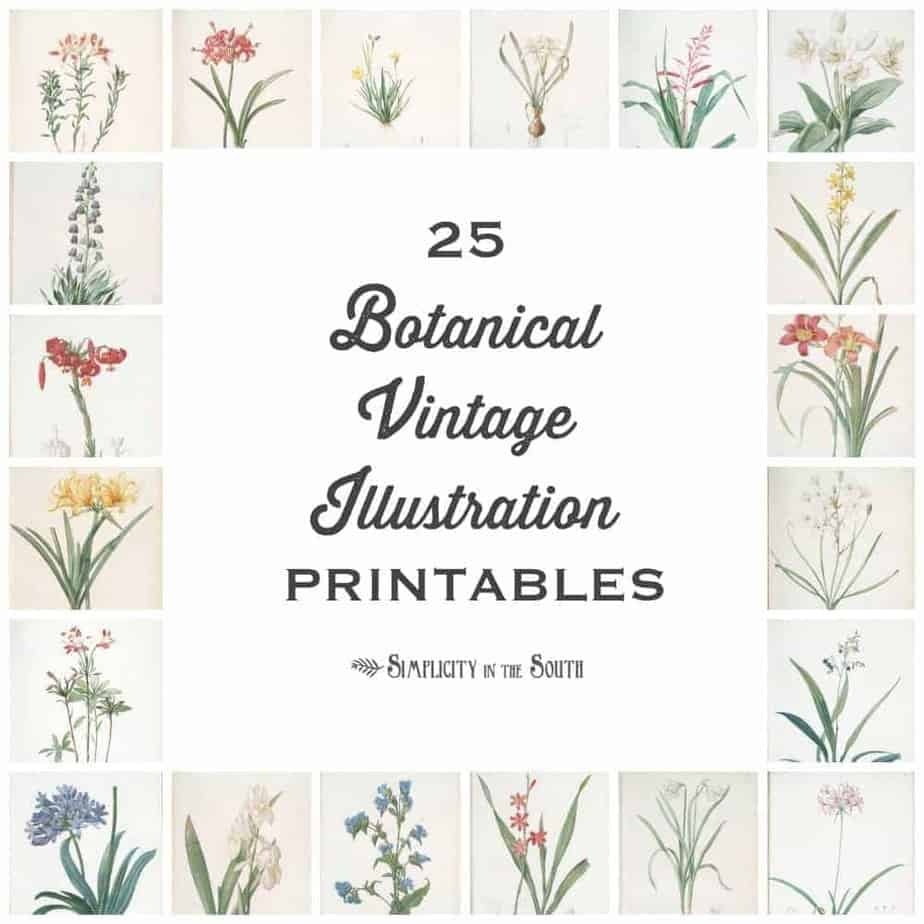 25 Vintage Botanical Illustrations: Free Printable Art - Floral Printables Free