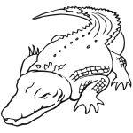Australian Saltwater Crocodile Coloring Page | Free Printable   Free Printable Pictures Of Crocodiles