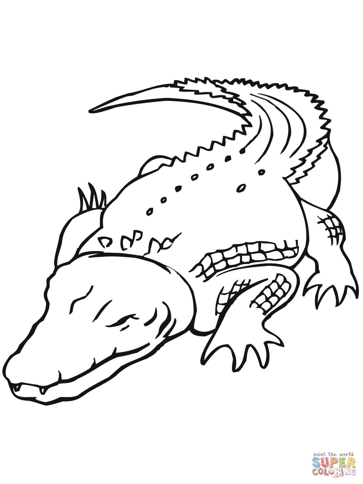 Australian Saltwater Crocodile Coloring Page | Free Printable - Free Printable Pictures Of Crocodiles
