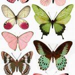 Beyond24Colours: Free Printables | Butterflies | Butterfly   Free Printable Butterfly Wings