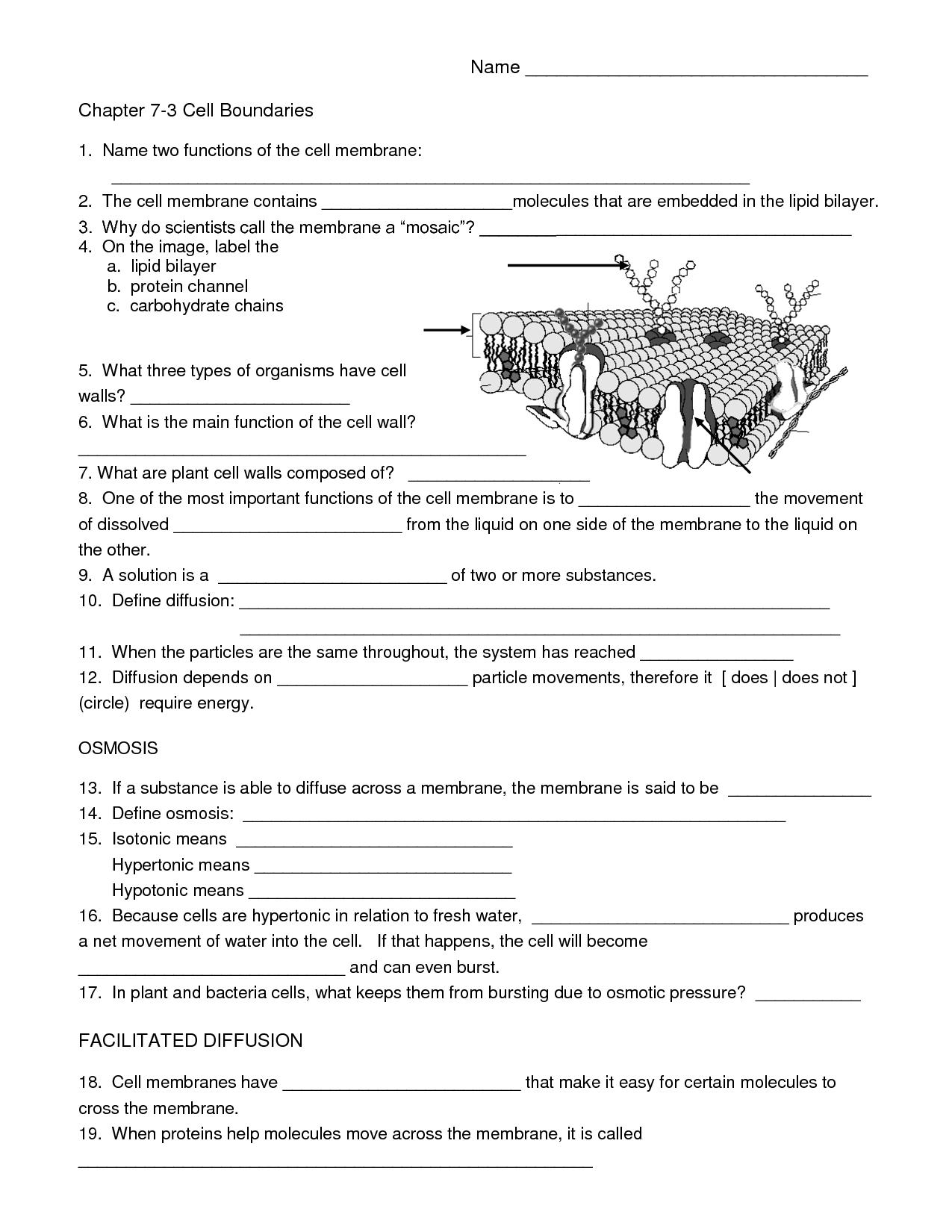 Biology Cell Worksheets | Carpe Diem Science | Science Worksheets - Free Printable Biology Worksheets For High School