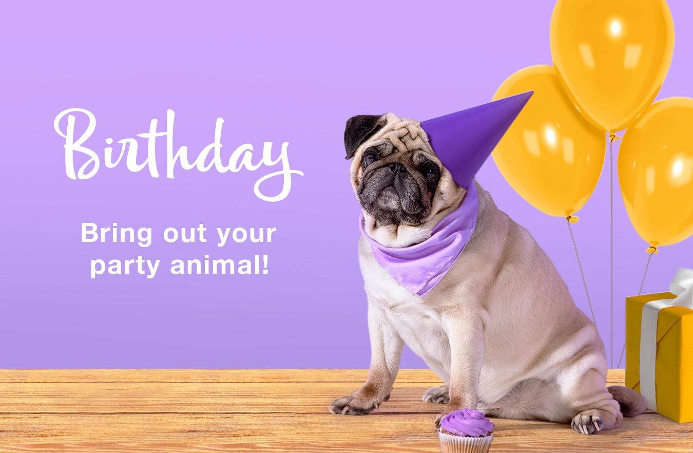 Birthday Cards & Greetings | American Greetings - Free Printable Pug Birthday Cards
