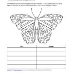 Butterfly Activities   Enchantedlearning   Free Printable Butterfly Worksheets