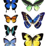 Butterfly Template Printable | Go To Printable Images Of Butterflies   Free Printable Butterfly Wings