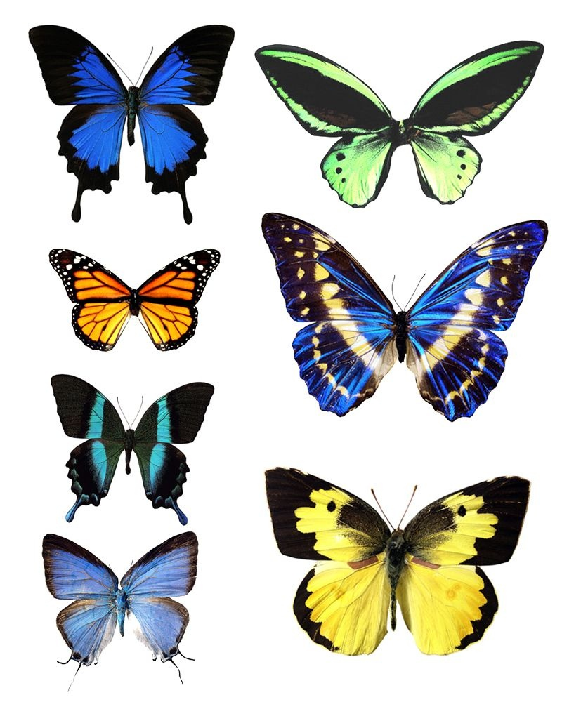 Butterfly Template Printable | Go To Printable Images Of Butterflies - Free Printable Butterfly Wings