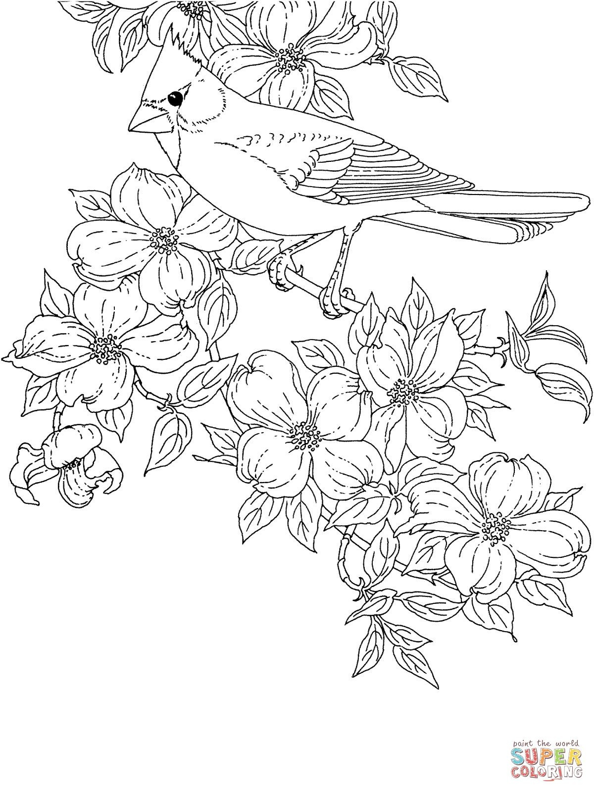 Cardinal Bird And Flowering Virginia State Flower | Super Coloring - Free Printable Pictures Of Cardinals