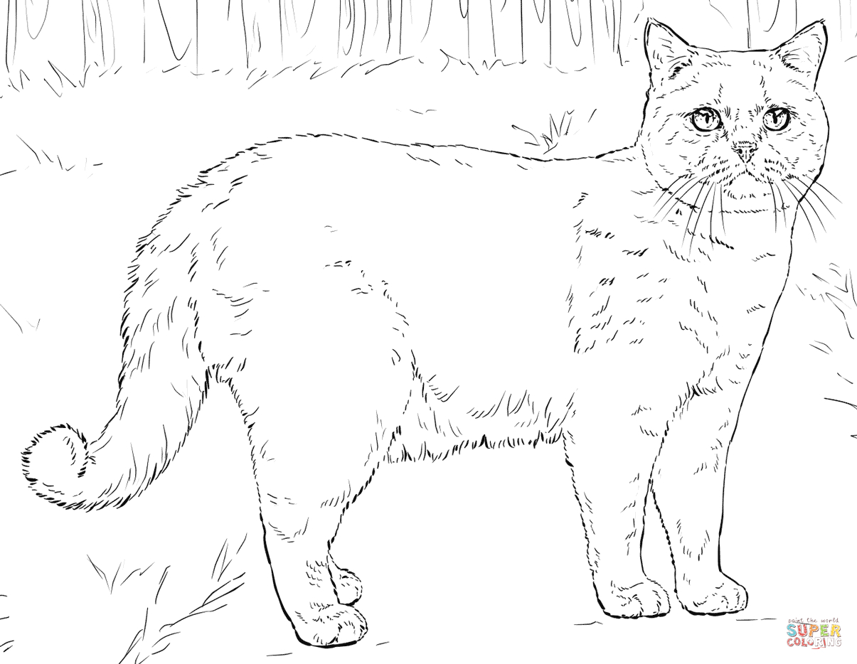 Cats Coloring Pages   Free Coloring Pages - Free Printable Cat Coloring Pages