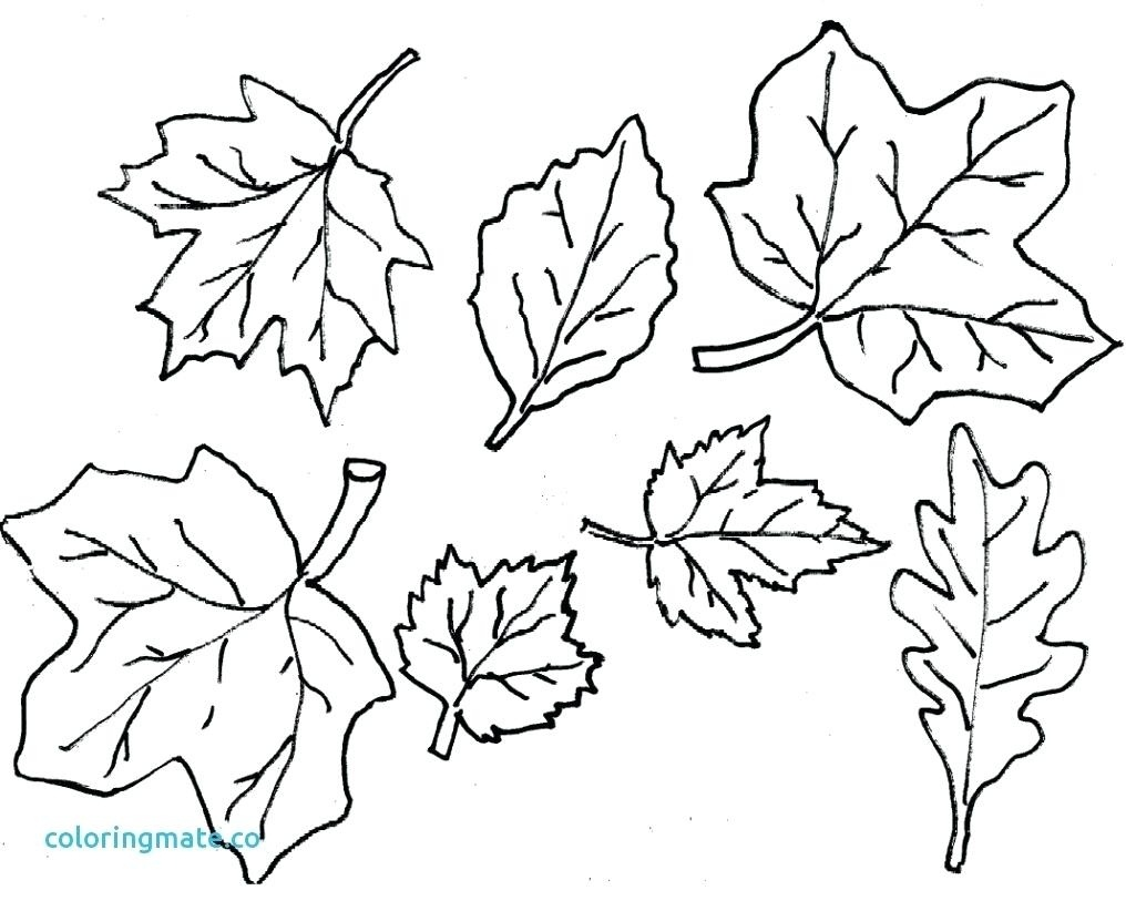 Coloring Ideas : Coloring Ideas Fallves Pages O Printable Freef - Fall Leaves Pictures Free Printable