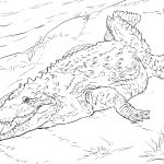 Crocodile Coloring Pages | Free Coloring Pages   Free Printable Pictures Of Crocodiles