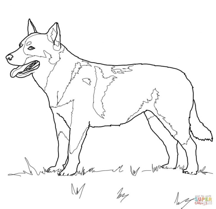 Free Printable Dachshund Coloring Pages