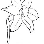Daffodil Coloring Page | Free Printable Coloring Pages   Free Printable Pictures Of Daffodils