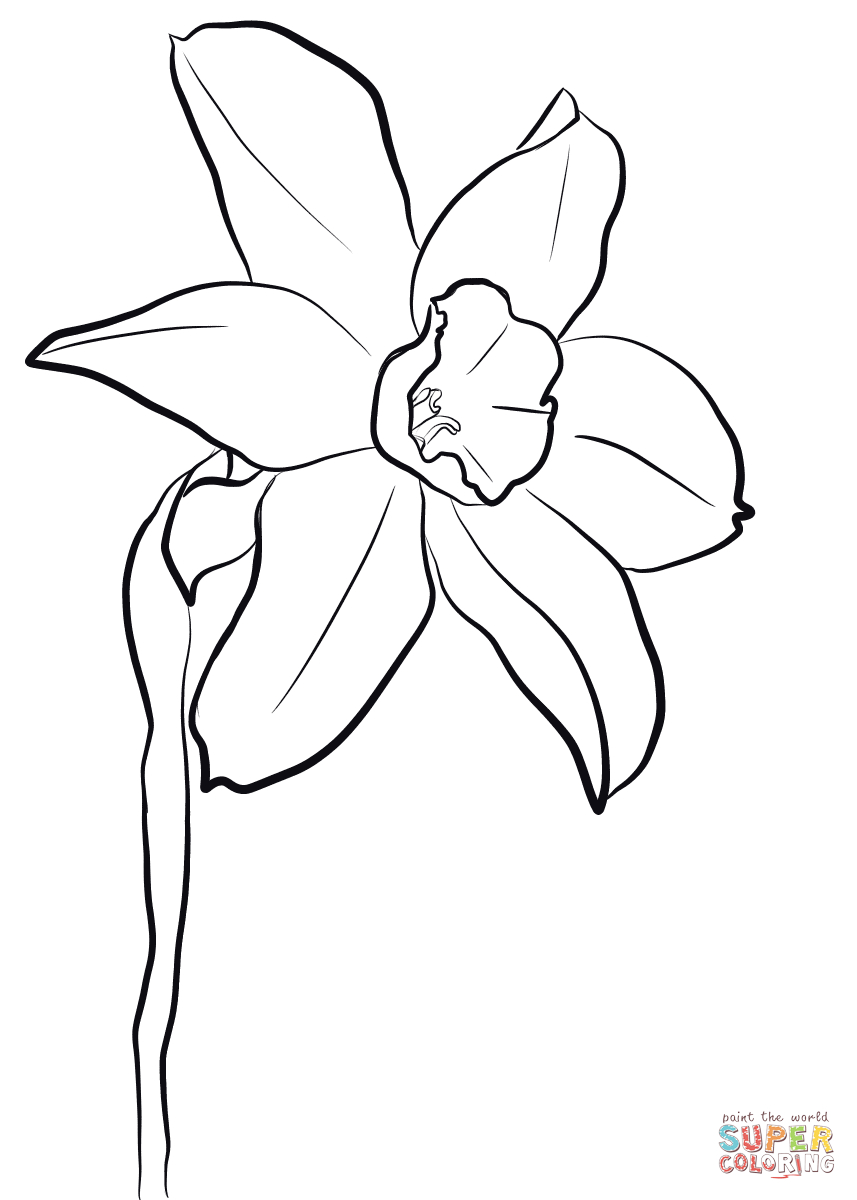 Daffodil Coloring Page | Free Printable Coloring Pages - Free Printable Pictures Of Daffodils