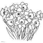 Daffodil Coloring Page. How To Draw A Tiger Lily Stepstep   Free Printable Pictures Of Daffodils