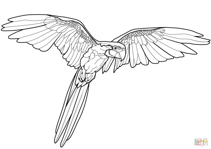Free Printable Parrot Coloring Pages