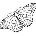 Free Butterfly Wing Outline, Download Free Clip Art, Free Clip Art   Free Printable Butterfly Wings