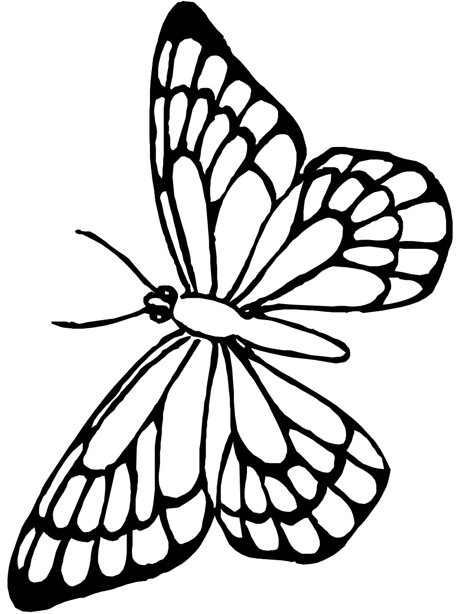 Free Monarch Butterfly Template, Download Free Clip Art, Free Clip - Free Printable Butterfly Template