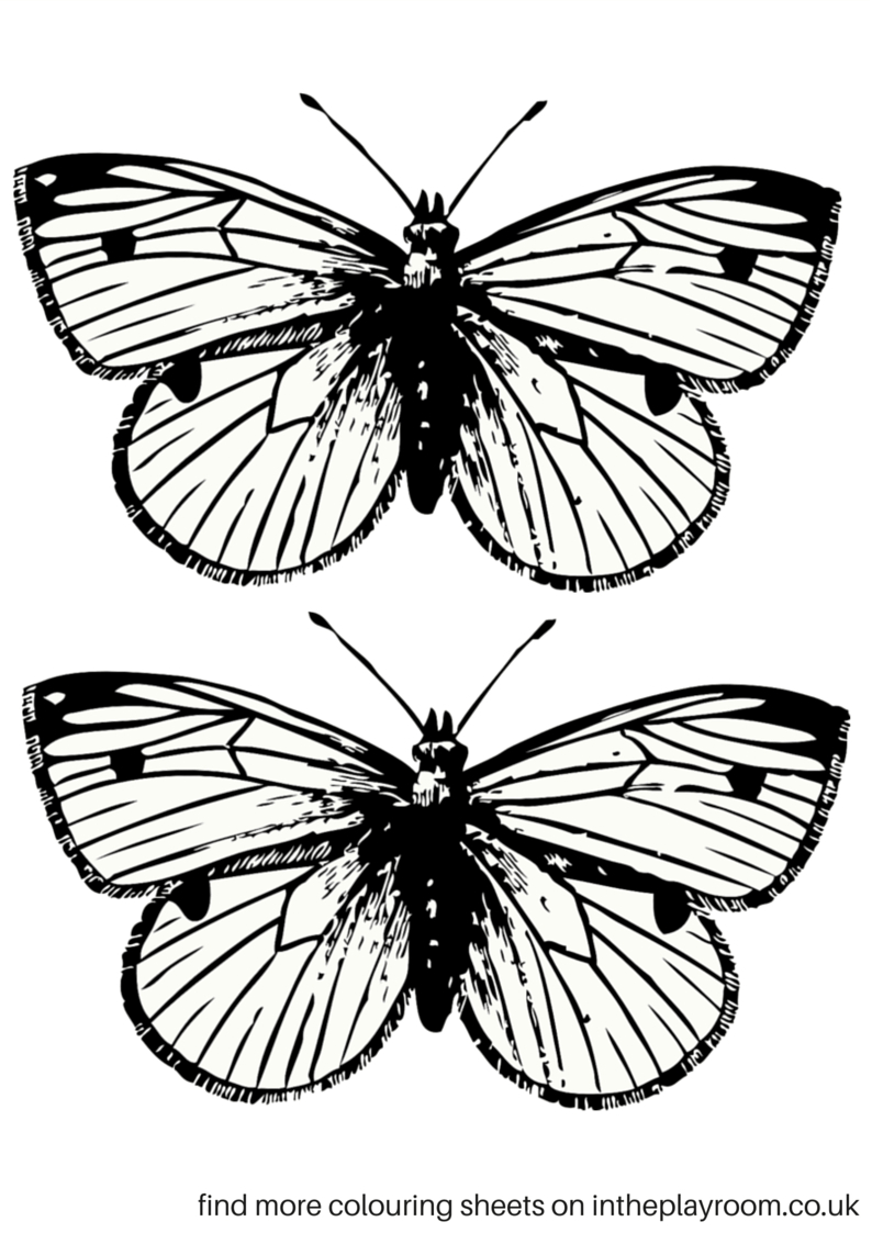 Free Printable Butterfly Colouring Pages | Education | Butterfly - Free Printable Butterfly Template