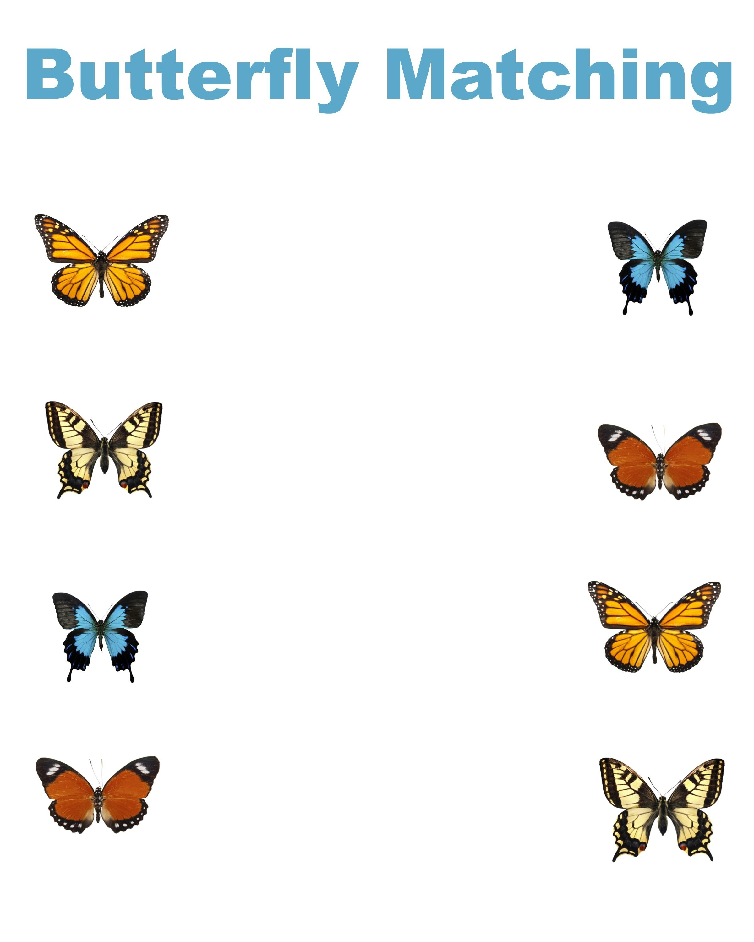 Free Printable Butterfly Matching Worksheet - Jenny At Dapperhouse - Free Printable Butterfly Worksheets